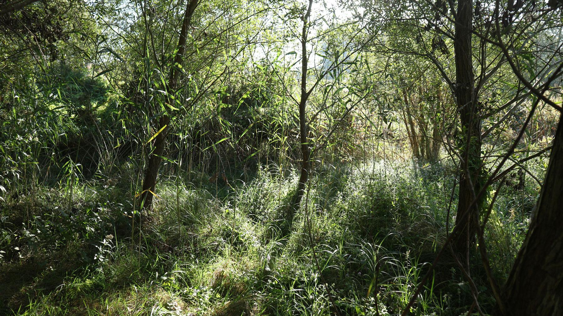 """GEANNULEERD - Bezoek aan natuurreservaat """"Het rietveld van Neerpede"""""""