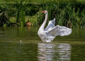 Les oiseaux d'eau