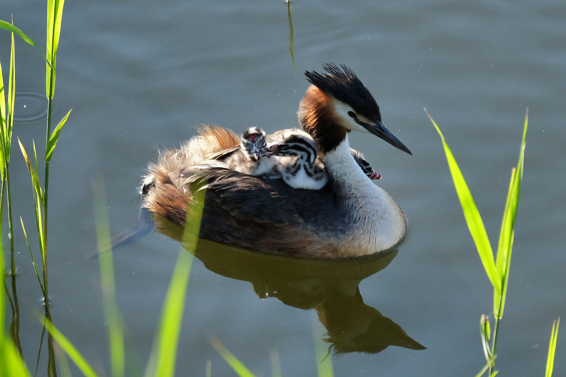 Watervogels en zangvogels in het Pedepark