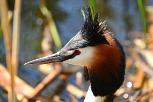 Oiseaux d'eau et oiseaux chanteurs au Parc de la Pede