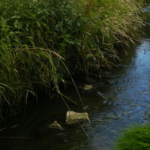 L'eau, source de vie et bien plus