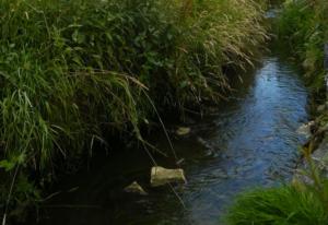 Water, bron van leven en zoveel meer